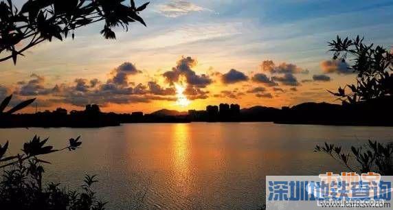 宝安立新湖二期春节开放 新建多个主题景观节点