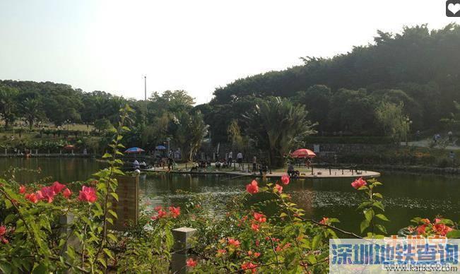 深圳中山公园在哪里