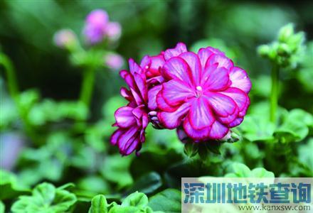2017上海国际花展开幕 展示面积约40公顷