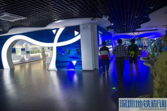 蛇口海洋博物馆开馆 蛇口海洋博物馆地址在哪28日起免费向市民开放